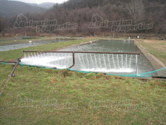 Business for sale near sofia bulgaria breeding pond and for Big fish ponds for sale