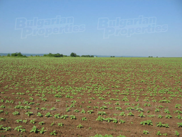 fertile land - photo #1