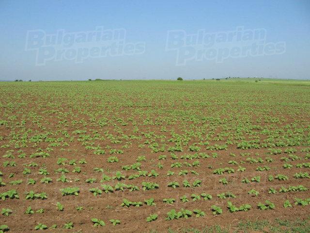 fertile land - photo #5
