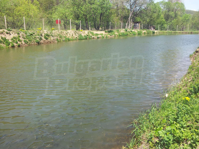 Farm for sale near borovets bulgaria fish farm 15 km for Big fish ponds for sale