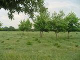 Голям парцел земеделска земя до Пловдив
