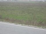 zemedelska-zemya Продава близо до Видин