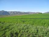 Land for sale near Kyustendil