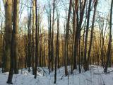 160-летний лес в уникальном месте!