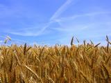 Земеделска земя в Априлци