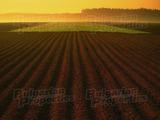Земеделска земя в землището на село в община Провадия