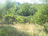 Regulated plot for sale near Vidin