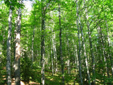 Deciduous forest in an area with beautiful scenery