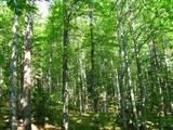 Широколистна гора в район с прекрасна природа