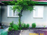Two houses with spacious yard in a village near Lake al. Stamboliyski
