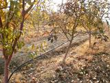 Овощна градина до Сандански