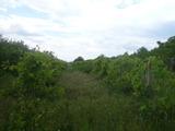 Лозе на 24 км от Видин