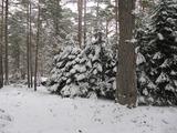 Регулиран планински парцел сред борова гора край Пловдив