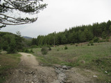 Wonderful plot for building complex or hotel in pine forests by Velingrad