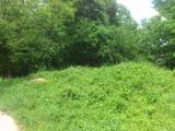 Лиственный лес на окраине города Трявна