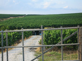 Spacious vineyard and regulated plot near Yambol