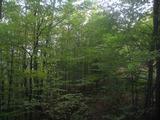 Лес между городами Етрополе и Правец