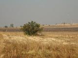 Regulated plot of land near Stara Zagora