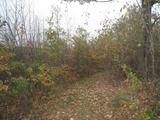 Лес вблизи г. Монтана