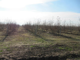 Apple garden of 40,000 sq.m. near Plovdiv