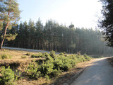 Large plot with panoramic views of the spa resort Velingrad