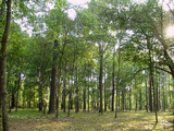 Large plot of deciduous forest near Vidin