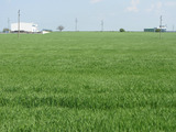 "Земеделска земя на изхода на  гр. Русе , до хипермаркет ""Jumbo """