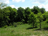 Лиственный лес в горахв 25 км от Велико Тырново