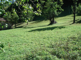 Парцел земя с постройка, на  5 км. от Рибарица