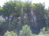 Forest for sale near Bansko