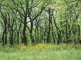 Лес вблизи г. Попово