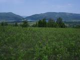 Agricultural land near Veliko Tarnovo