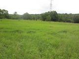 Земеделска земя в Бистрица