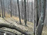 Лес вблизи г. Априлци