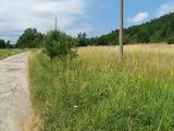 Земеделска земя  на 5 км от гр. Елена