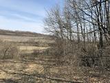 Лес вблизи г. Велико Тырново