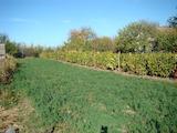 Development land in village Vrav