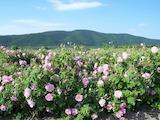 Сельскохозяйственная земля вблизи г. Казанлък