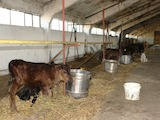 Animal farm for sale near Stara Zagora
