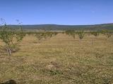 Orchard for sale near Sevlievo