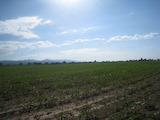 Земеделска земя в Световрачене