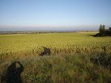 Сельскохозяйственная земля вблизи г. Добрич